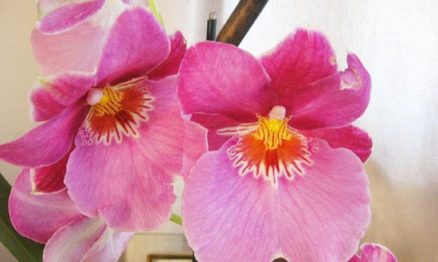 orquidea-12