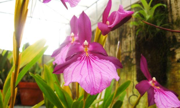 orquidea-13