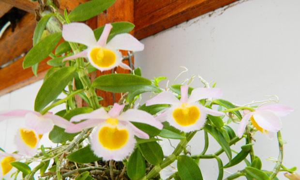 orquidea-18
