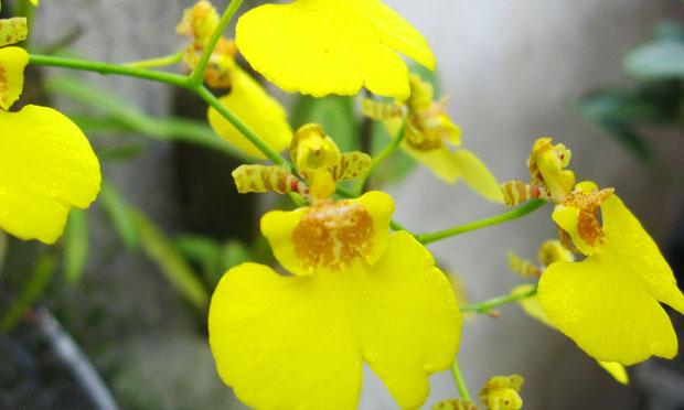 orquidea-20