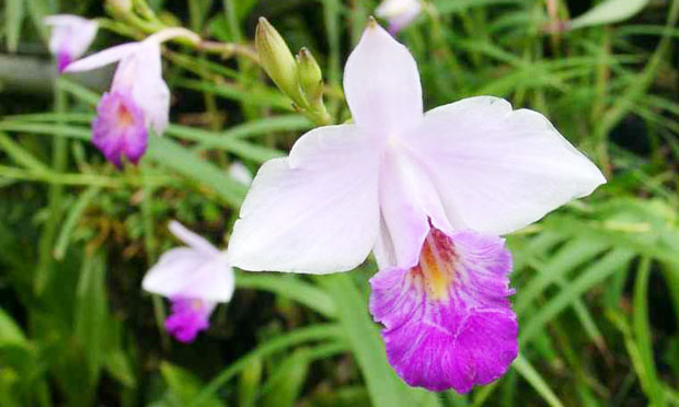 orquidea-21