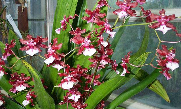 orquidea-25