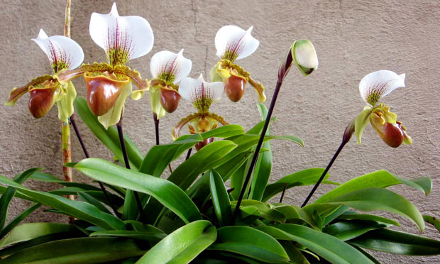 orquidea-30