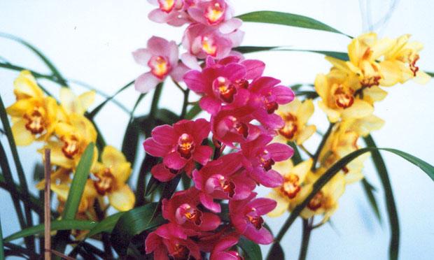 orquidea-32