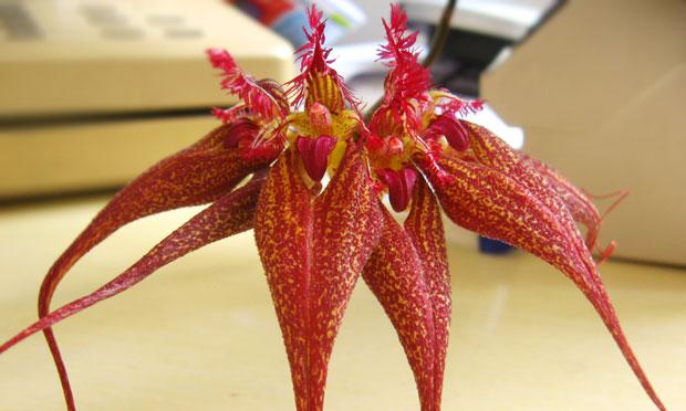 orquidea-36