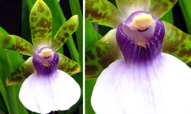 orquidea-37