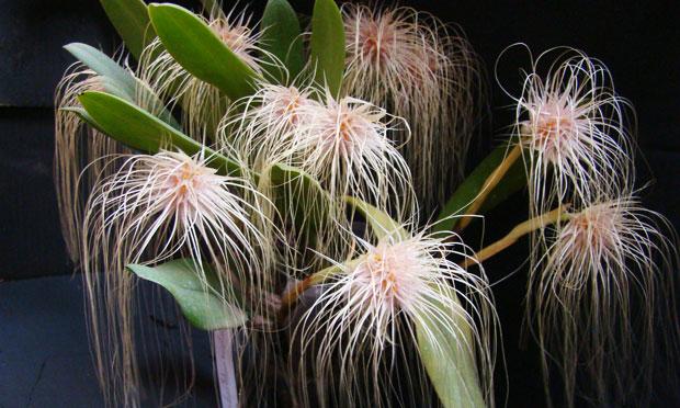 orquidea-40