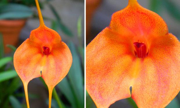 orquidea-41