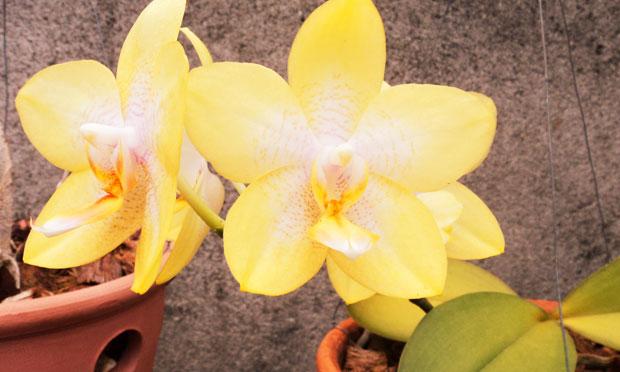 orquidea-44