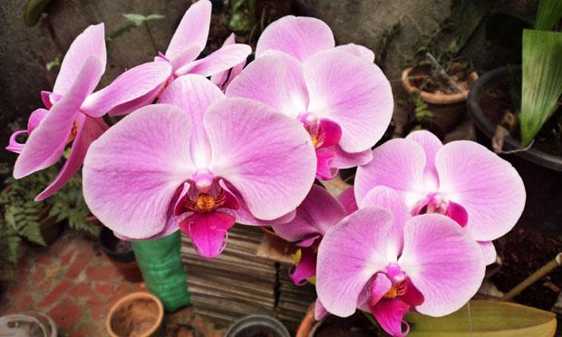orquidea-45