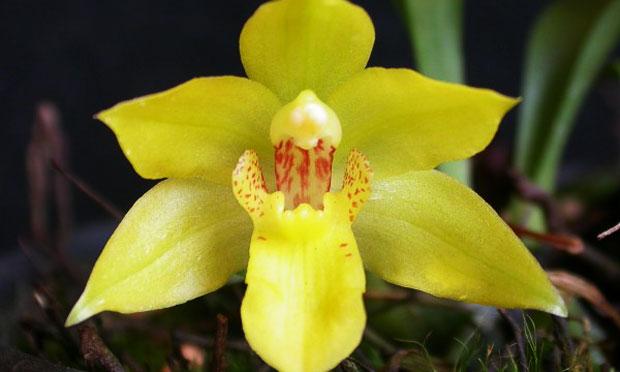 orquidea-46