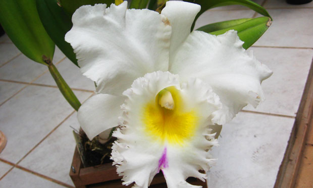 orquidea-7